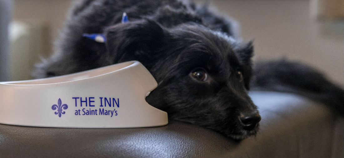 pet policy at inn at saint mary's south bend